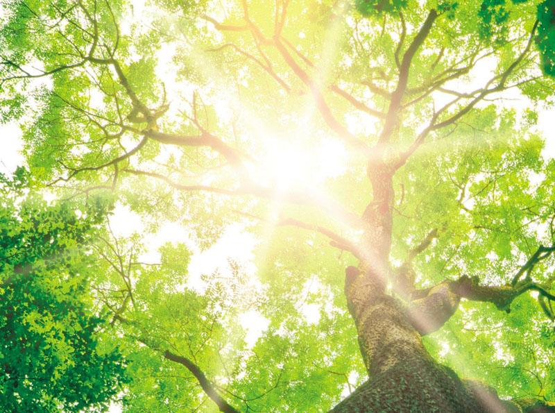 Tree of Life Baumbestattung Kreis Göppingen