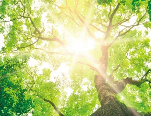 Bestattung im eigenen Garten: Tree of Life Baumbestattung
