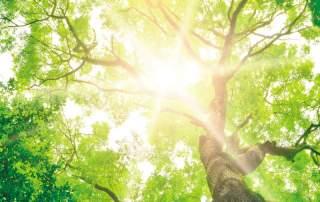 Tree of Life - Baumbestattung